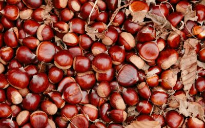 History Of Chestnuts In Europe